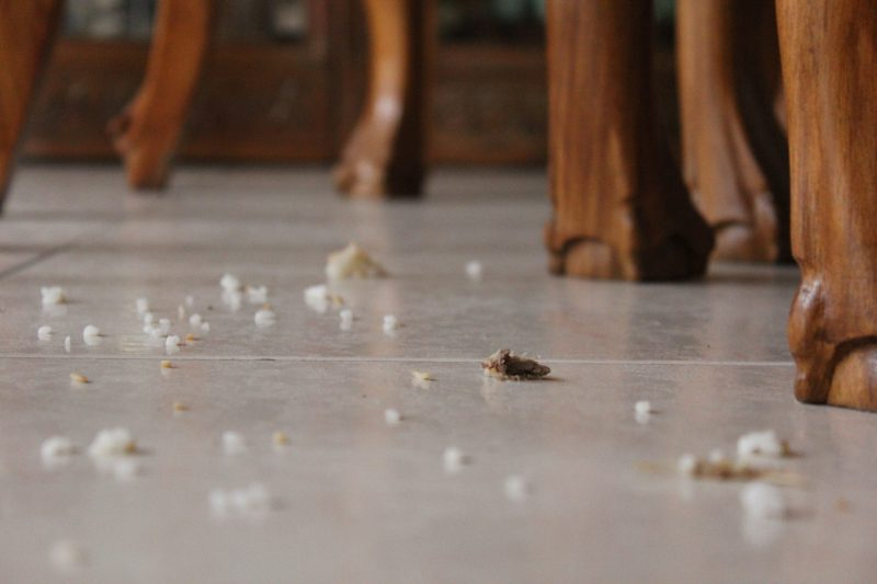 bread crumbs on the floor